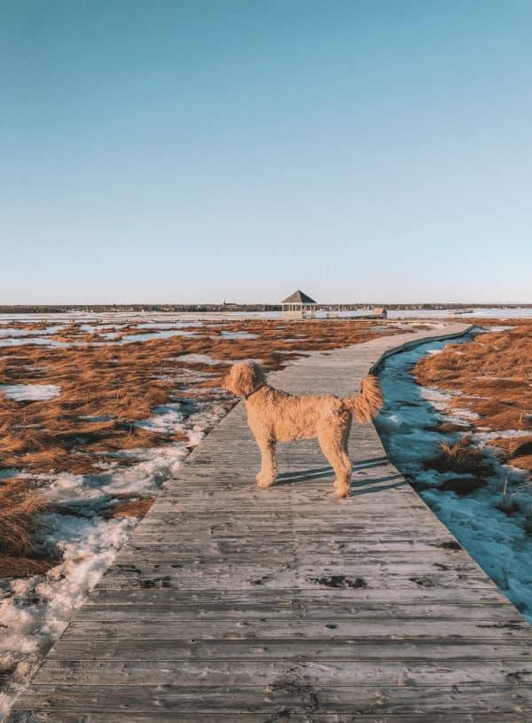 Hay Island Park: A Beautiful Island in Atlantic Canada
