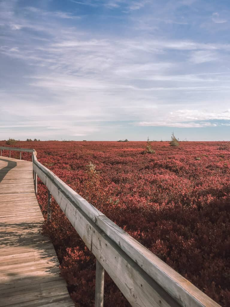 7 locations to visit in New Brunswick