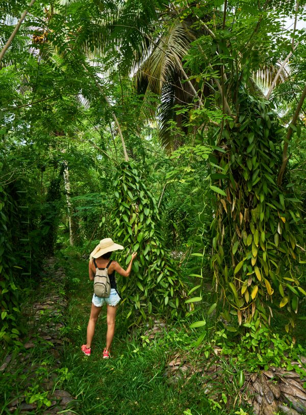 Back Packing Hawaii – Ultimate Backpacking Hawaii Guide